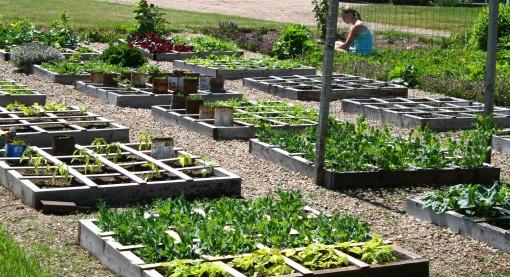 Square Foot Garden 05